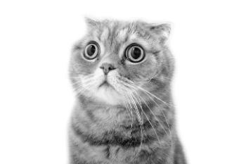 https://www.staceybarr.com/images/frightenedcat