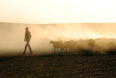 shepherdleadingflock