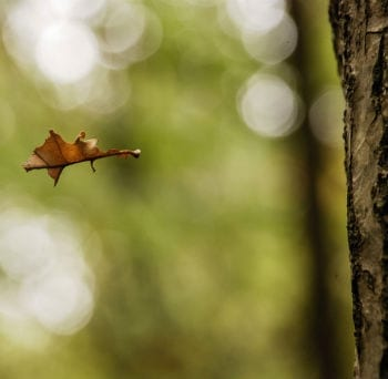 leaffallingfromtree