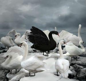 whiteandblackswans